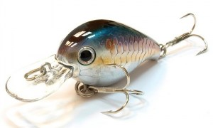 Lucky_Craft_Clutch_MR_270_MS_American_Shad
